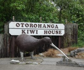 OTORONGA KIWI HOUSE